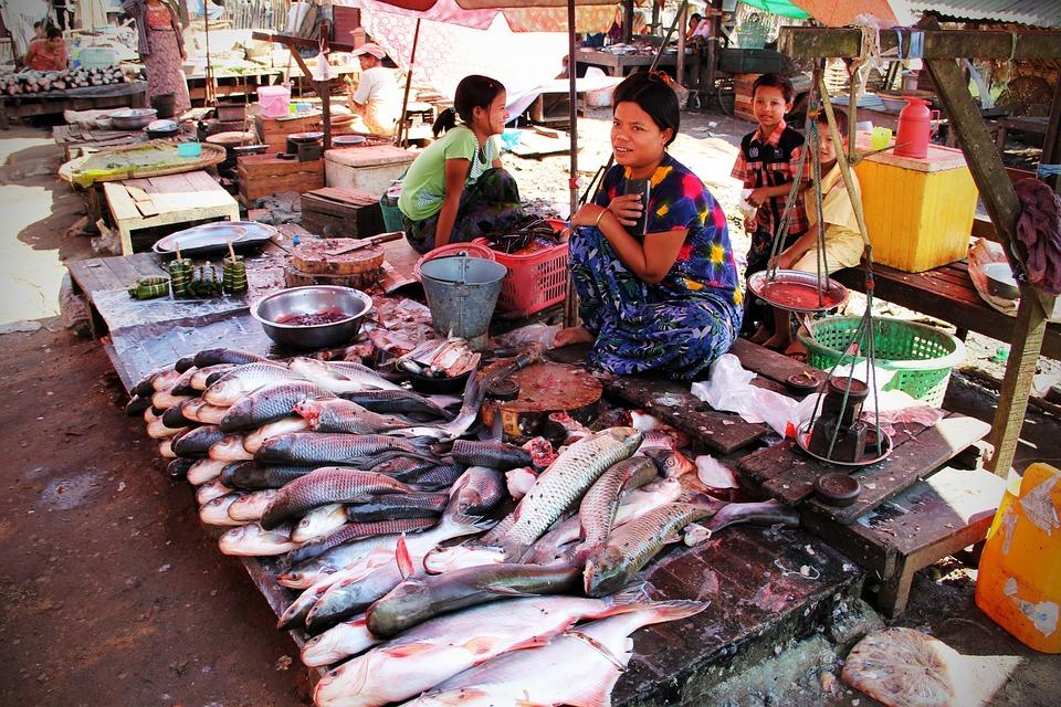 Fish Market, Market, Fish, Food
