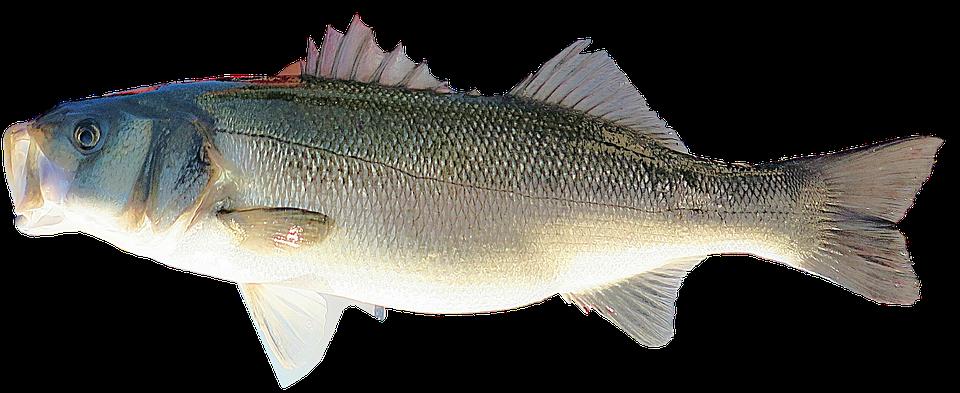 Isolated, Fish, Seas, Ocean, Food, Nutrition
