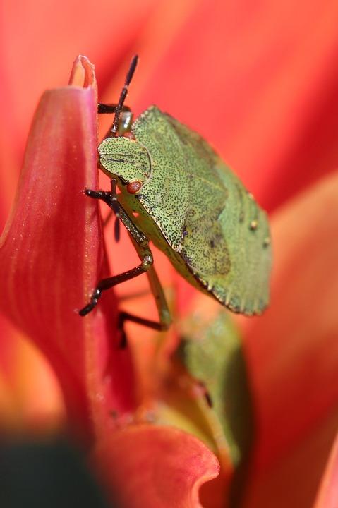 Wants, Flower, Nature, Macro, Close Up, Garden, Food
