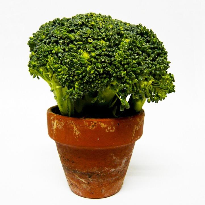 Broccoli, Vegetable, Green, Flower Pot, Food, Healthy