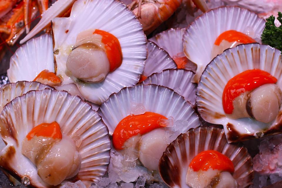 Scallops, Seafood, Food, Shellfish, Fresh, Fish
