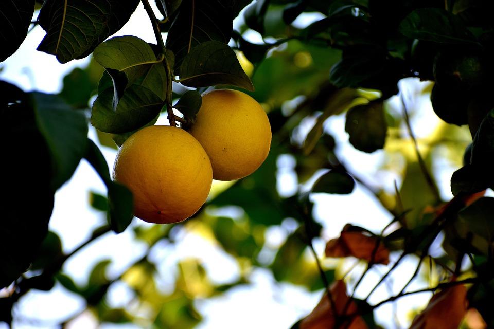 Citrus, Fruit, Healthy, Food, Fresh, Sweet, Juicy