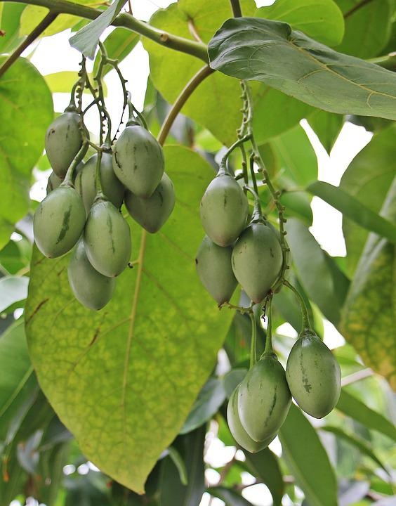 Tree Fruits, Tree, Nature, Fruits, Food, Aesthetic