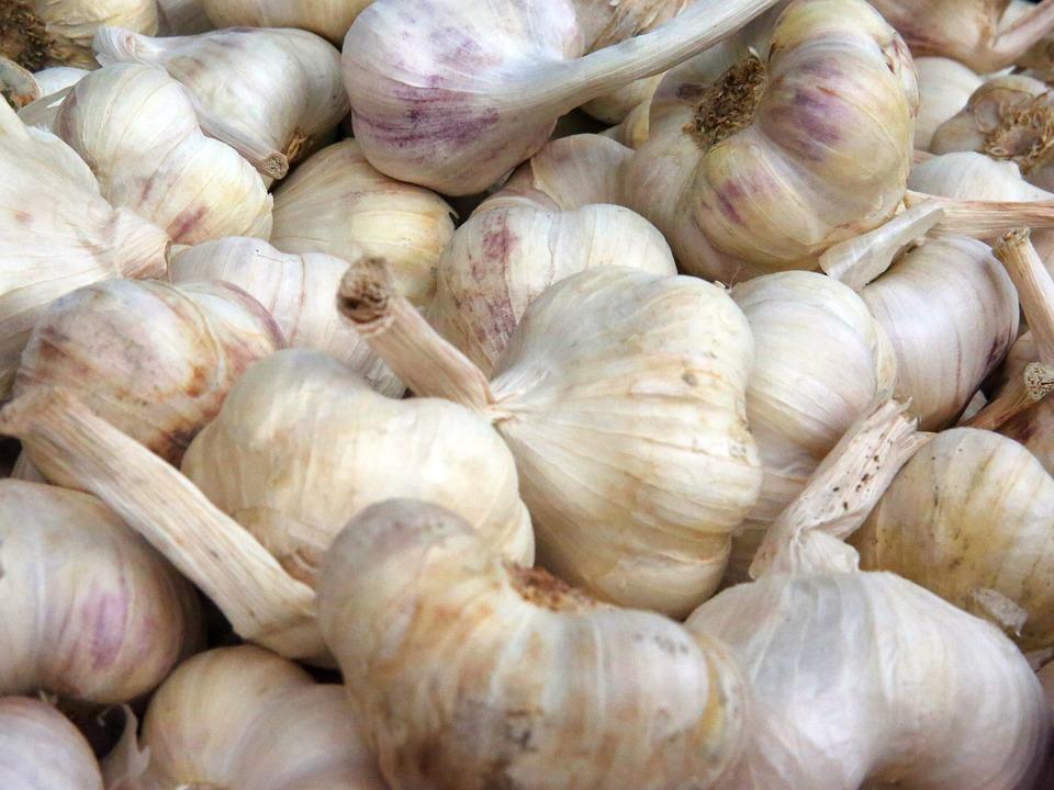 Garlic, Aromatic, Spice, Food, Frisch, Gourmet, Head