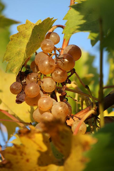 Food, Grapes, Acini
