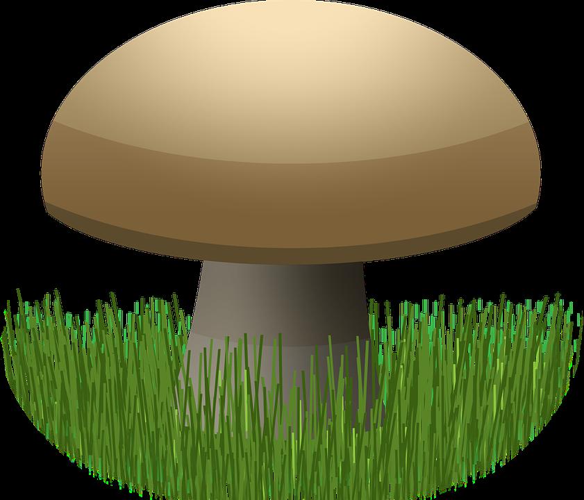 Graphic, Mushroom, Food, Earth, Grass