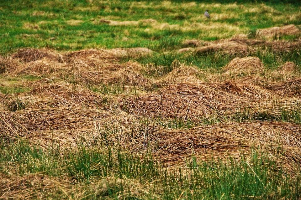 Hay, Mow, Meadow, Food, Grass, Cut, Lawn Cut, Winter