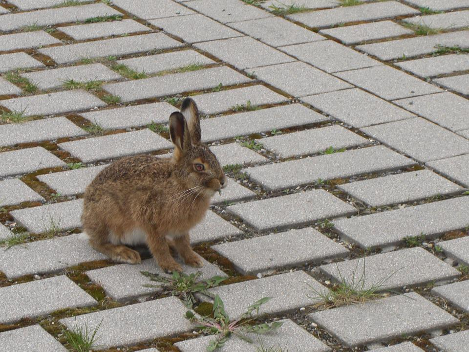 Hare, Parking, Food
