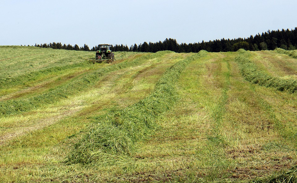Hay, Harvest Time, Grass, Food, Agriculture