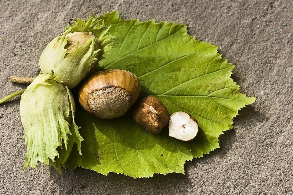 Nut, Hazelnut, Green, Eat, Food, Shell
