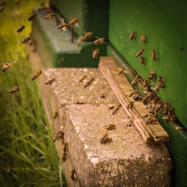 Insect, Food, Bee, Honey, Honey Stick, Beehive, Eat