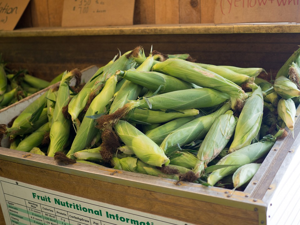 Corn On The Cob, Vegetable, Food, Nature, Harvest