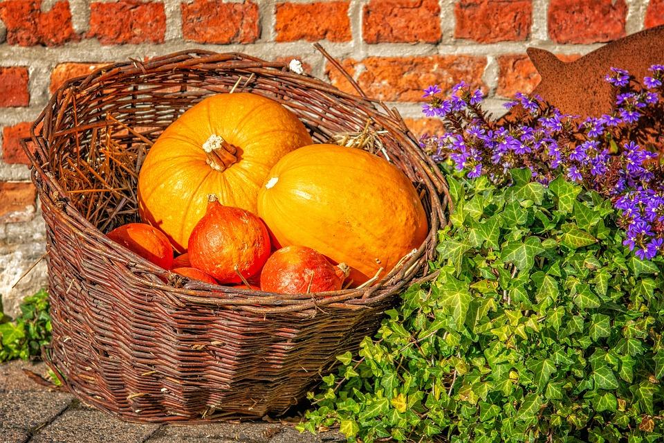 Pumpkin, Autumn, Basket, Woven, Orange, Food