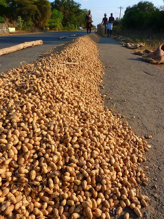 Peanut, Peanuts, Food
