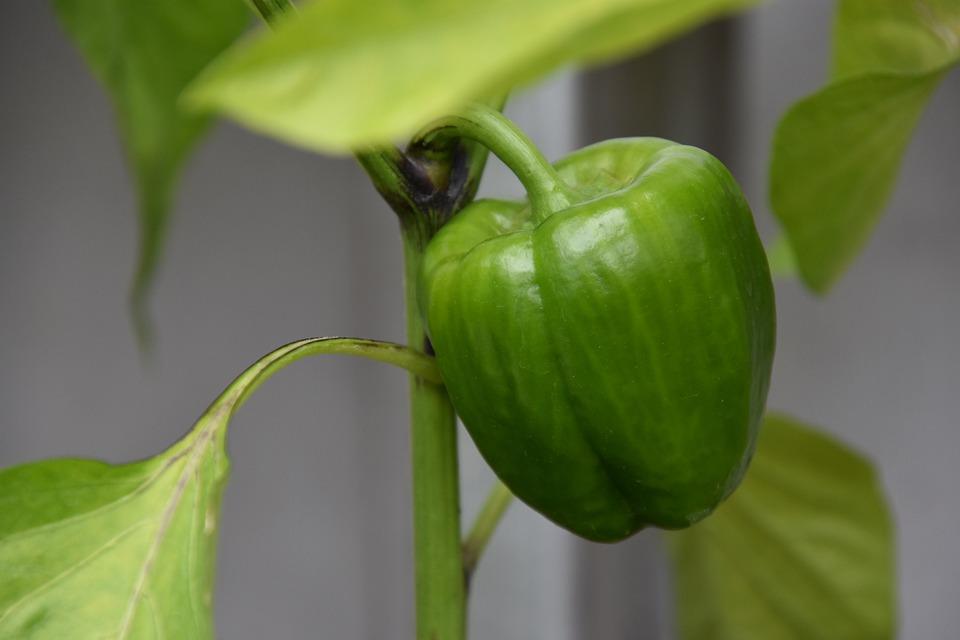 Paprika, Plant, Green Vegetables, Food, Garden