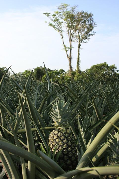 Nature, Plant, Food, Tree