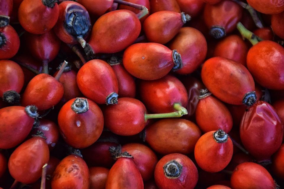 Rose Fruit, Briar, Shrub, Rose, Food, Medicine, Plant