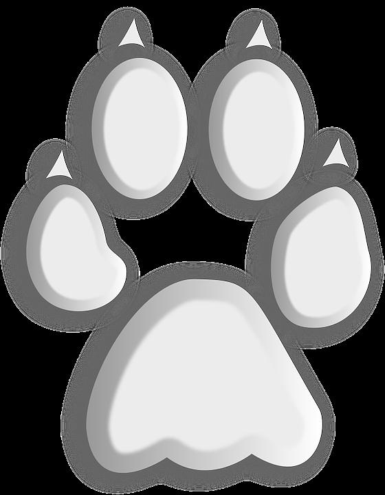 Wolf, Paw, Footprint, Animal, Foot, Trace