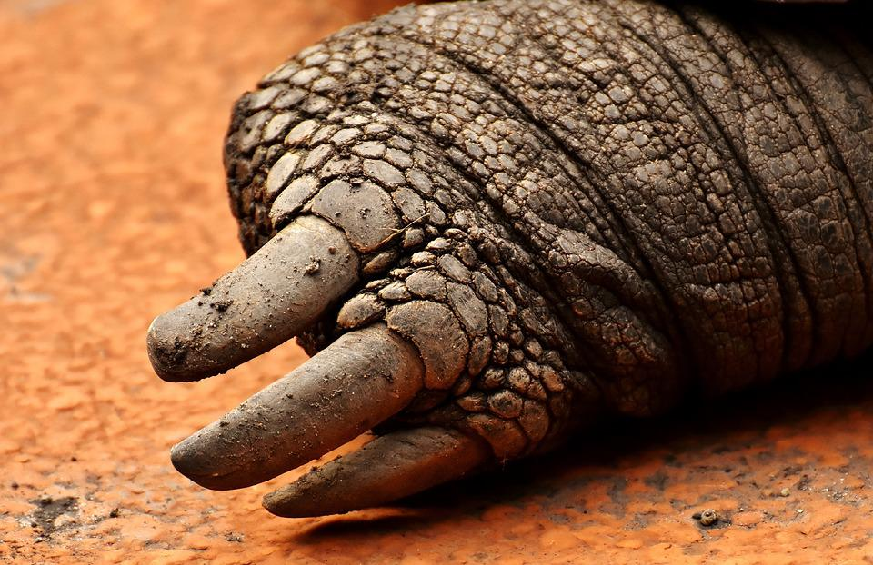 Giant Tortoises, Foot, Rear, Animals, Panzer, Zoo