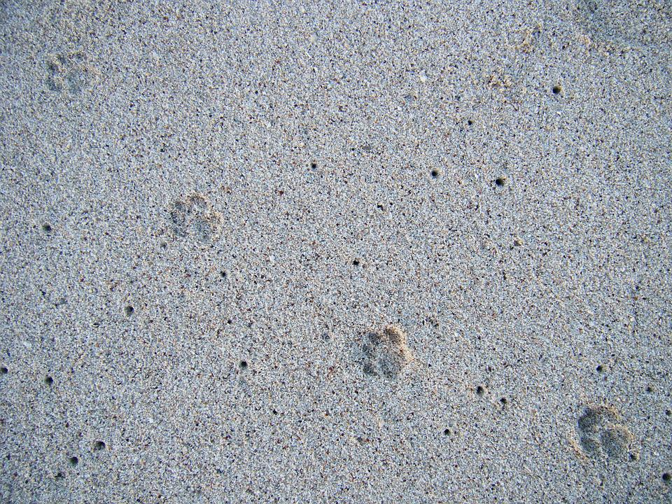 Sand, Animal, Foot, Print, Hawaii