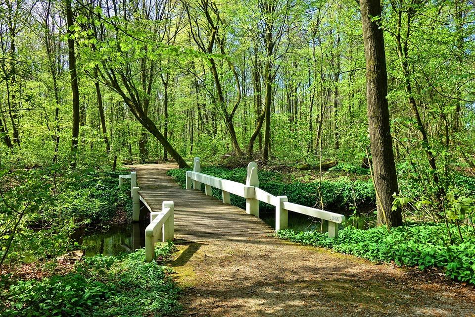 Bridge, Wooden Bridge, Footbridge, White Wooden Bridge