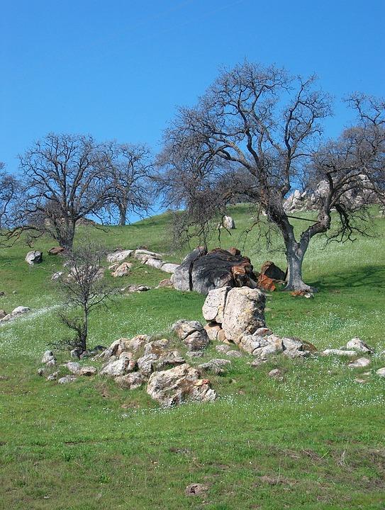 Foothills, Oak Trees, Rocks