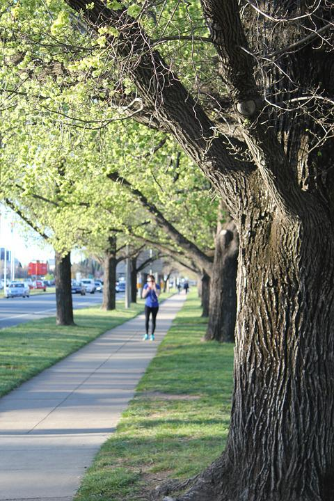 Jogging, Tree, Footpath, Green