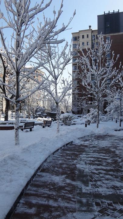 Community, Snow, Lane, Parking, Footpath, Winter, Tree