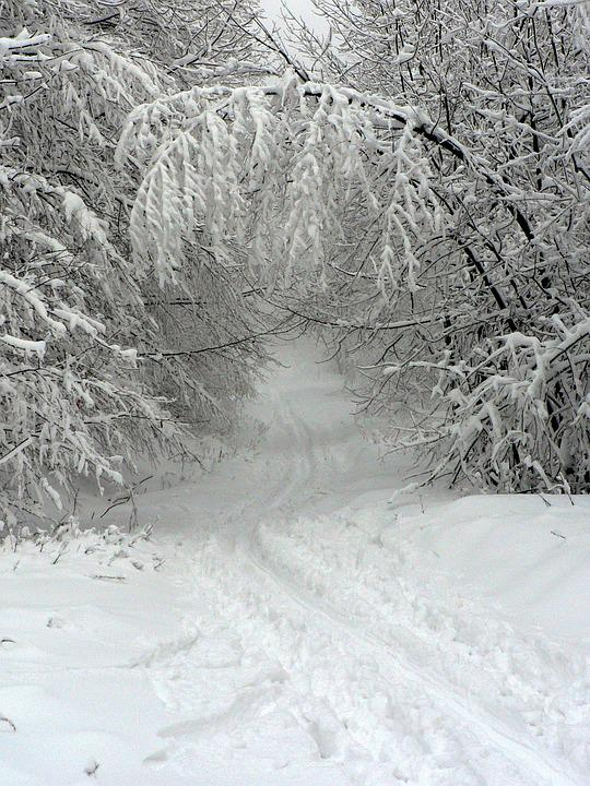 Winter, Snow, Footprint, The Fog, Trees, Forest