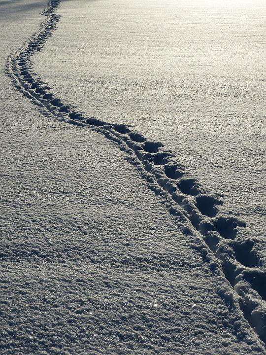 Snow, Footprints, Winter, White