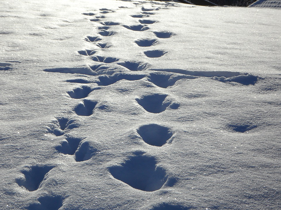 Traces, Tracks In The Snow, Snow, Winter, Footprints
