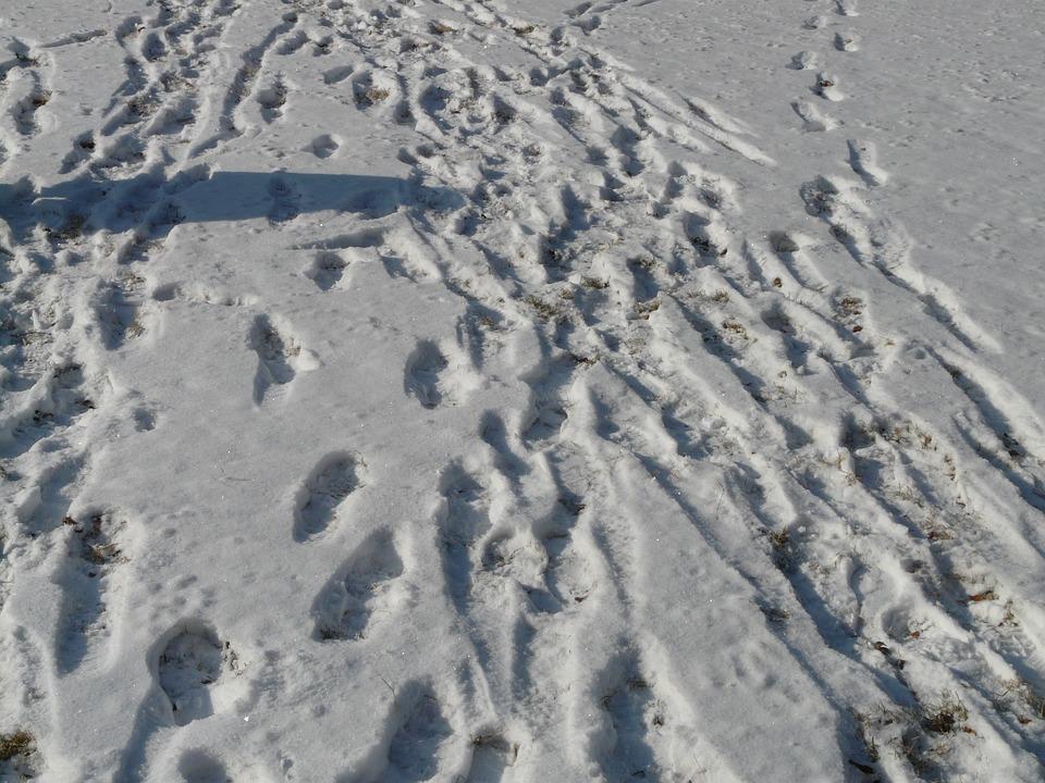 Traces, Snow, Wintry, Snow Lane, Footprints, Reprint