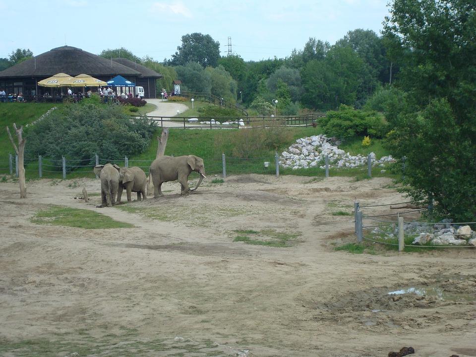 Zoo, Elephants, Poznan, Trip, For Children