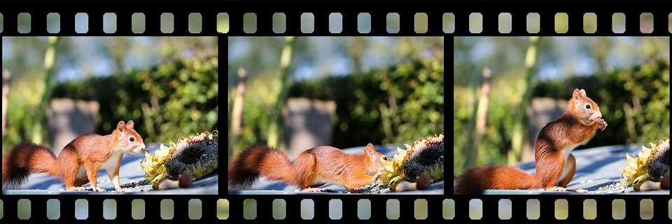 Squirrel, Rodent, Foraging, Eating, Wildlife, Forest