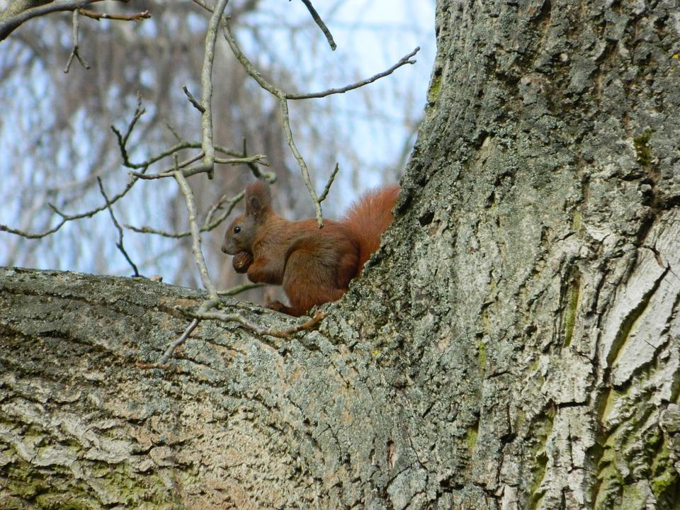 Squirrel, Rodent, Forest Animal, Cute