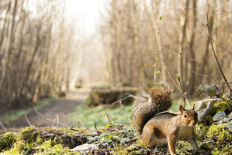 Squirrel, Wood, Undergrowth, Forest, Animal, Roux