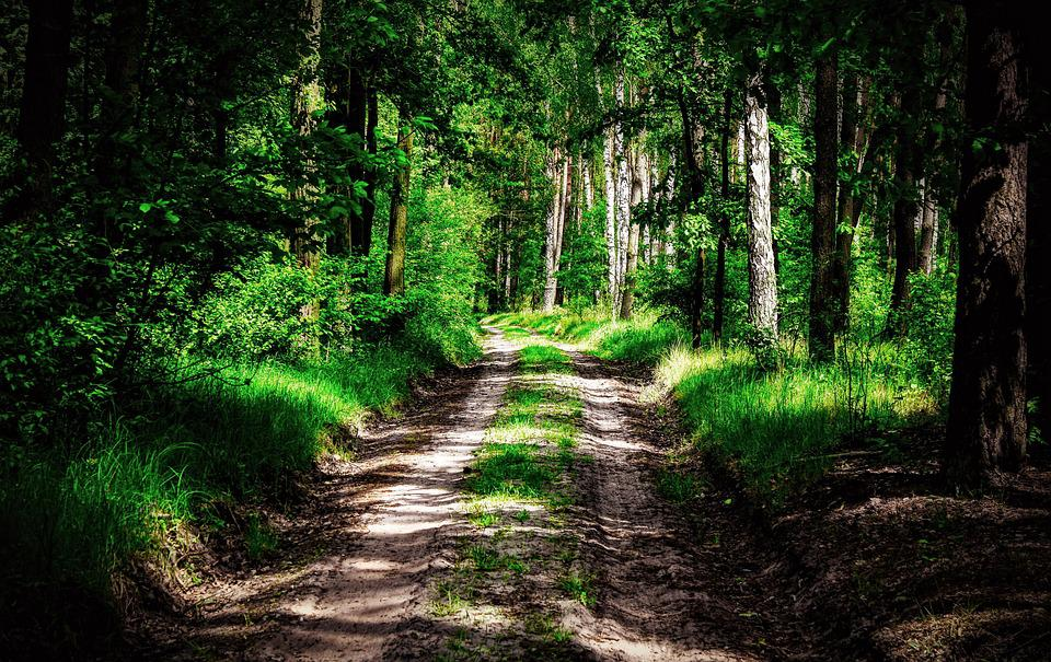 Forest, Way, The Path, Tree, Light, Forests, Atmosphere