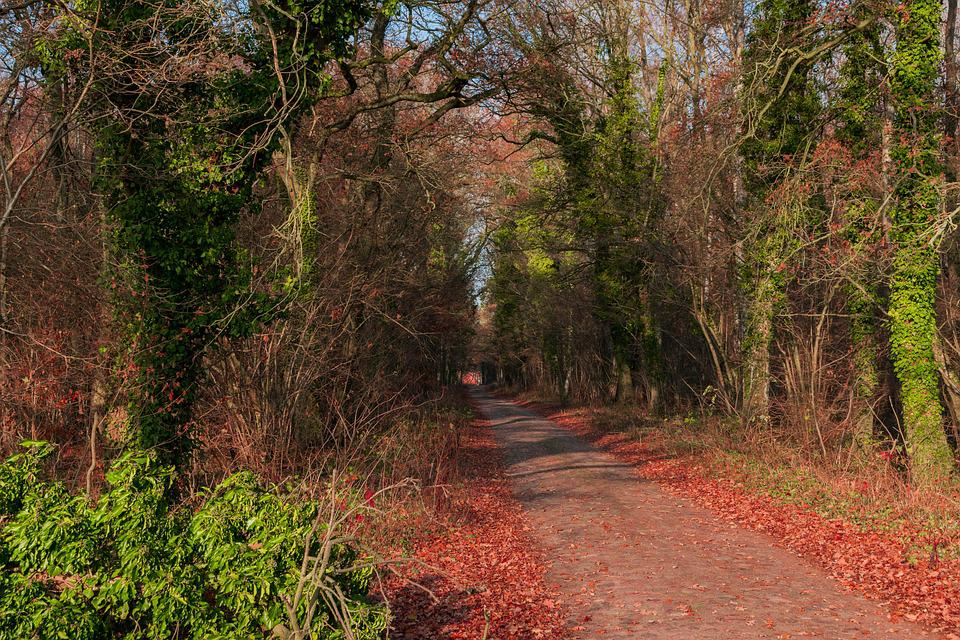 Forest, Away, Autumn, Path, Forest Path, Trees