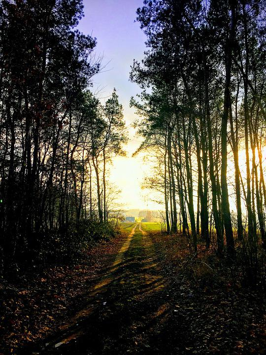 Forest, Landscape, Wood, Autumn, Beautiful, Nature