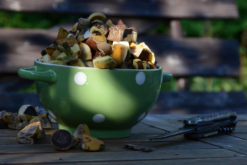 Mushrooms, Forest, Nature, Autumn, Close Up, Edible