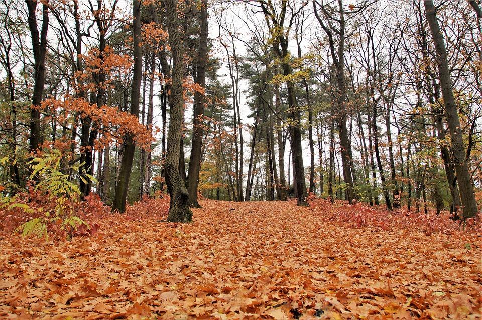 Forest, Autumn, Fallen, Leaves, Deciduous, Colored