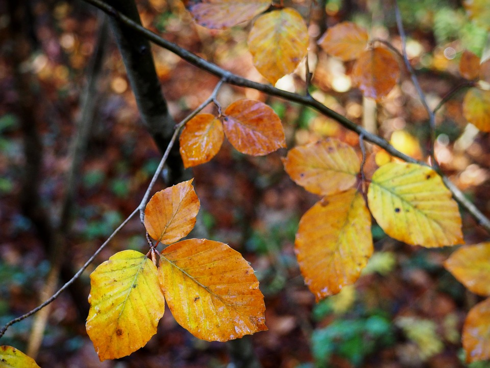 Leaves, Fall, Yellow, Nature, Autumn, Tree, Forest