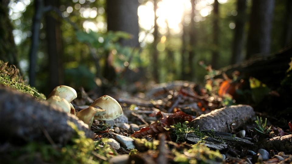 Forest Floor, Autumn Mood, Autumn, Forest, Mushrooms