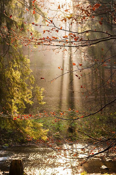 Sun, Shadow, Leaves, Tree, Forest, Autumn, Water, Trees