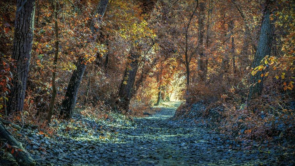Autumn, Path, Landscape, Trees, Forest, Nature, Leaves