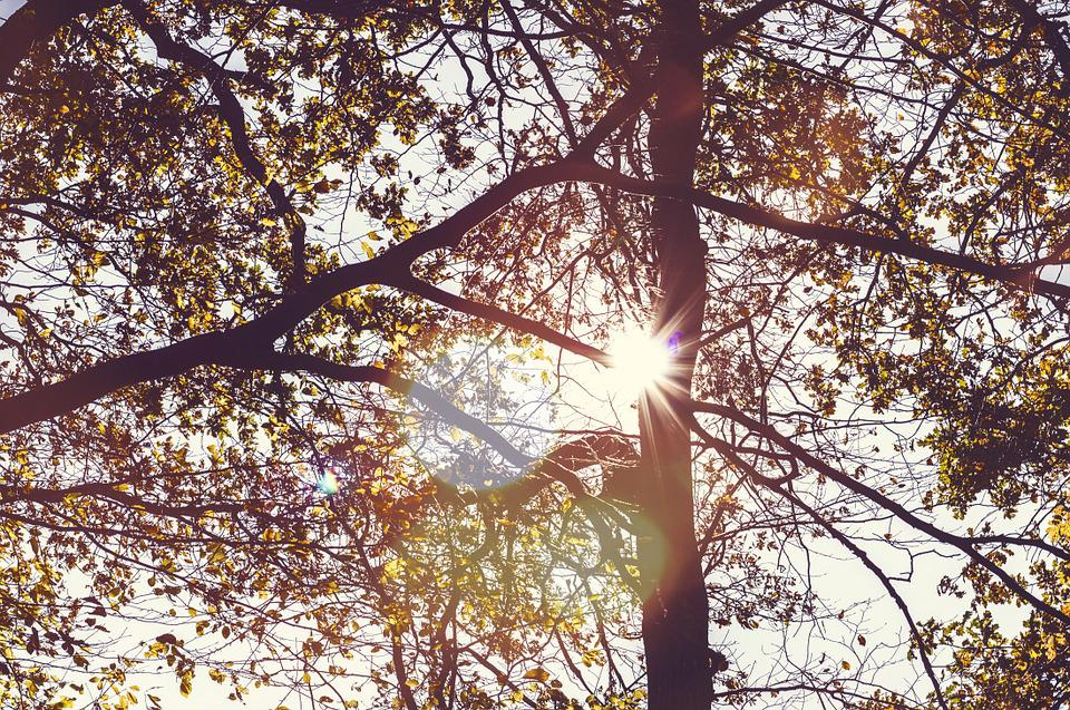Autumn, Leaves, Trees, Forest, Sun