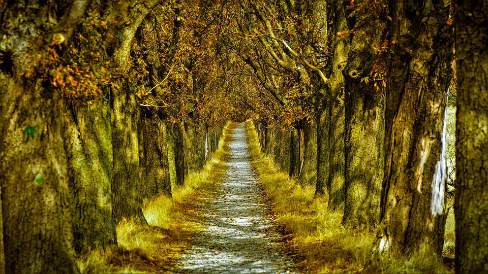 Avenue, Trees, Path, Tree Lined, Woods, Forest