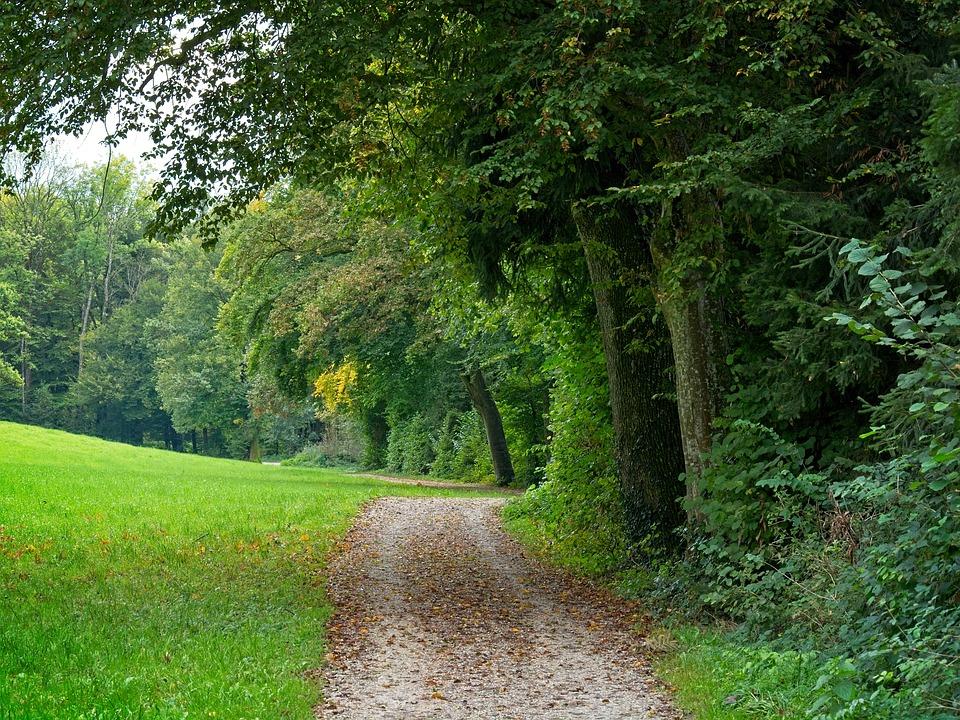 Autumn, Away, Nature, Forest, Trees, Autumn Mood, Path