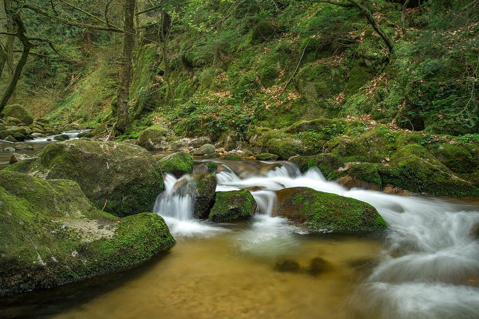 Waters, Waterfall, Nature, River, Bach, Forest, Stones