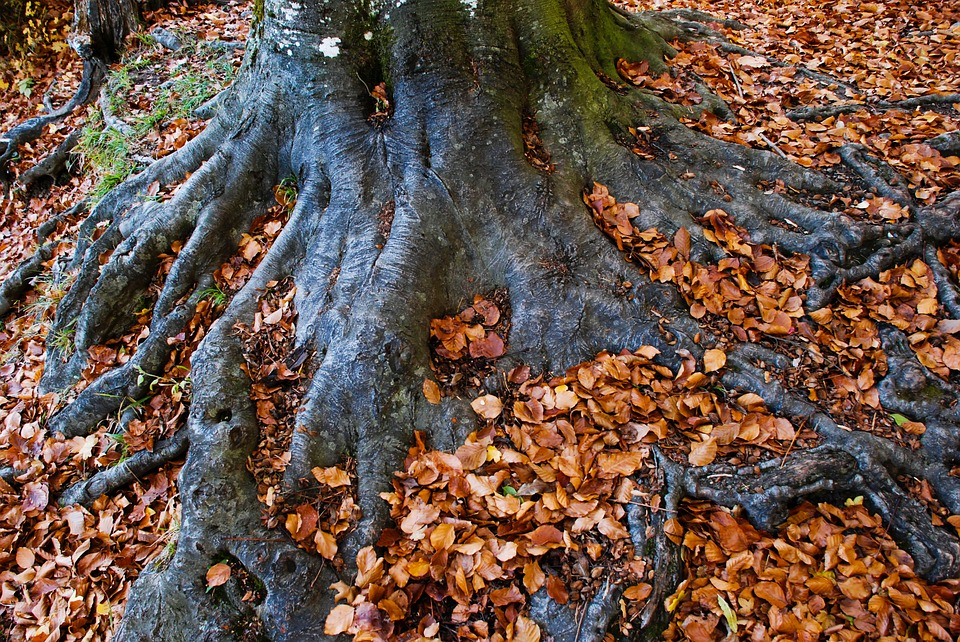 Log, Root, Autumn, Wood, Nature, Leaves, Bark, Forest